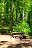Lugar al resto en el bosque Fotos de archivo libres de regalías