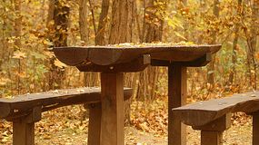 Lugar de descanso en bosque Fotografía de archivo libre de regalías