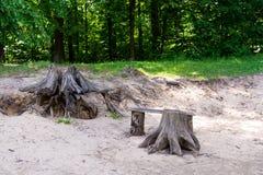 Lugar de descanso na floresta durante a caminhada fotografia de stock royalty free