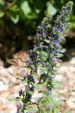 Lugar de reclinación de la mariposa Fotos de archivo libres de regalías