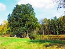 Lugar de relaxamento em um parque Fotografia de Stock