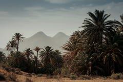 Lugar del desierto con las palmeras situadas en Almería Imagen de archivo libre de regalías
