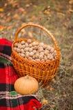 Lugar do outono, cesta com nozes imagens de stock