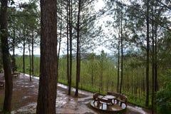 Lugar hermoso, naturaleza, bosque, cubierto Foto de archivo libre de regalías