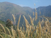 Lugar hermoso Wagamon_2 de Kerala Imagen de archivo libre de regalías
