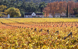Lugar home holandês com os vinhedos no vale de Hexriver Imagens de Stock