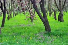 Lugar mágico Natureza verde O abrandamento e a tranquilidade na mola da floresta ajardinam fotografia de stock royalty free