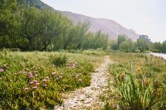 Lugar natural y relajaci?n en verano foto de archivo