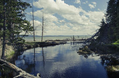 Lugar ocultado en Yellowstone Foto de archivo libre de regalías