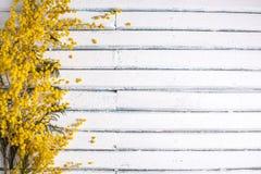 Lugar para seu texto Flores da mimosa em um fundo de madeira branco Fotos de Stock Royalty Free