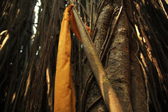 Lugar santo del Banyan Foto de archivo libre de regalías