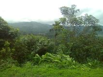 Lugar srilanqués de la selva fotos de archivo