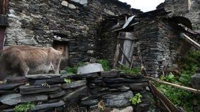 Lugar turístico surpreendente Ushguli situado no pé de Shkhara, uma das cimeiras caucasianos as mais altas, a comunidade de video estoque