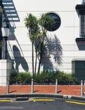 Lugar urbano da rua tropical da palma em Auckland fotos de stock