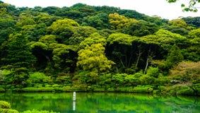 Lugar verde da reflexão Fotos de Stock Royalty Free