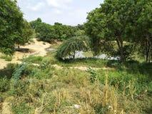 Lugar verde na vila fotografia de stock