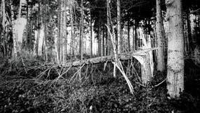Lugares bonitos em uma floresta Fotos de Stock