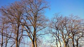Lugares bonitos em uma floresta Foto de Stock Royalty Free