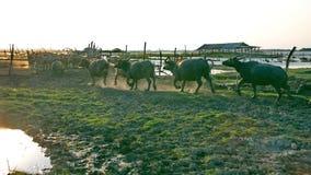 Lugares del ganado Imagenes de archivo
