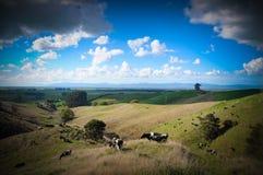 Lugares del paraíso en Nueva Zelanda Fotos de archivo
