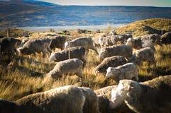 Lugares do paraíso em Nova Zelândia/lago Teanua Fotografia de Stock Royalty Free