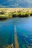 Lugares do paraíso em Nova Zelândia/lago Teanua Imagem de Stock