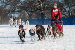 2014 luge tirée par des chiens de Subaru Loppet - Duke Rembleski Images libres de droits