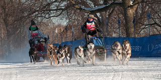 2014 luge tirée par des chiens de Subaru Loppet - Melissa Domino Photos stock