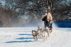2014 luge tirée par des chiens de Subaru Loppet - Sidney Johnsen Photo stock