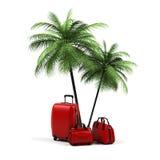 Luggage and palms Stock Photos