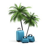 Luggage and palms. Luggage and palms on a white background Royalty Free Stock Photography
