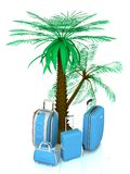 Luggage and palms Stock Images