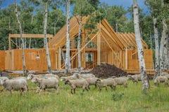 14 luglio 2016 - costruzione di una casa di legno 'di A' di proprietà dal fotografo Joe Sohm, Ridgway, Colorado Immagini Stock