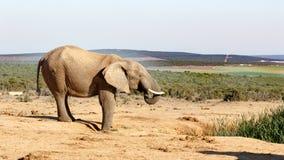 Lugn - afrikanBush elefant Royaltyfri Fotografi