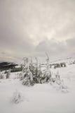 Lugn av vintern. Carpathian Ukraina. Royaltyfri Bild