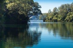 Lugn Lake Rotoiti royaltyfria bilder