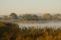 Lugn på en guld- Autumn Morning i träsket royaltyfri fotografi