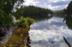 Lugna ankring i öarna av God& x27; s-fack, British Columbia Royaltyfria Foton