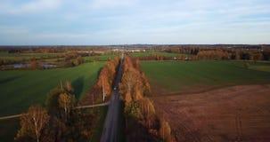 Lugna Autumn Evening View Over Yellow björkgränd med sikten på liten stad i östliga norr Europa stock video