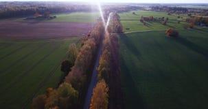 Lugna Autumn Evening View Over Yellow björkgränd med sikten på liten stad i östliga norr Europa arkivfilmer