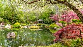 Lugna damm i japanträdgård Royaltyfri Fotografi