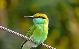 Lugna enorm naturskönhet för fågel royaltyfri foto