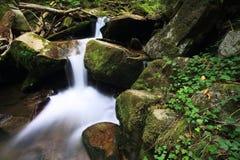 Lugna flod i mitten av skogen Fotografering för Bildbyråer