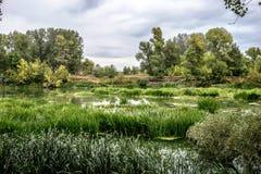 Lugna flod i sommarmorgonen med gröna träd på bakgrund arkivfoton