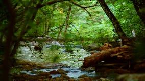 Lugna flod som djupt flödar i skogen lager videofilmer