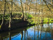 Lugna floden Royaltyfri Foto