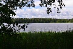 Lugna flodspring till och med pinjeskogen Arkivfoton