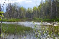 Lugna gurglandet av skogfloden royaltyfria foton