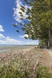 Lugna hav av Abel Tasman National Park, södra ö, nya Ze Royaltyfria Foton