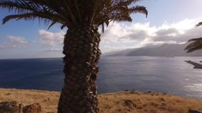 Lugna hav bland palmträden arkivfilmer